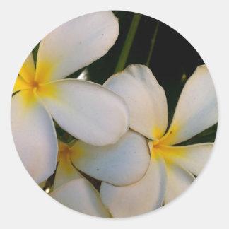 Plumeria Round Sticker