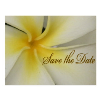 Plumeria Save the Date Postcard