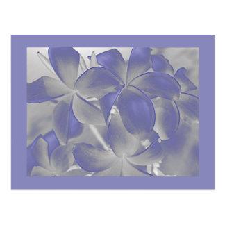 Plumeria Shadows Blue and Gray Postcard