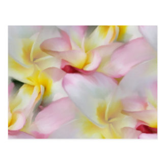 Plumeria Watercolor Postcard