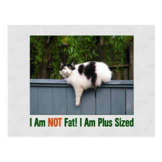 Plus Sized Kitty Postcard