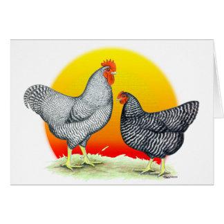 Plymouth Rocks:  Sunrise Card