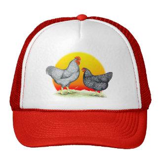 Plymouth Rocks:  Sunrise Trucker Hat