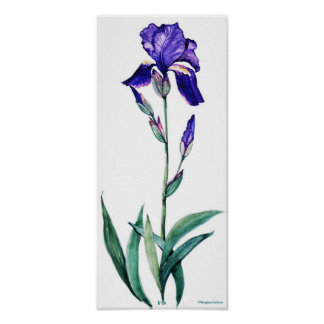 PMACarlson Elegant Iris Poster