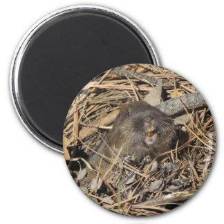 Pocket Gopher Magnet