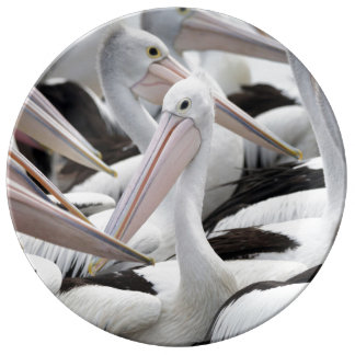 Pod of Pelicans Plate