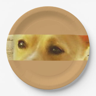 Podengo_podengo eyes paper plate