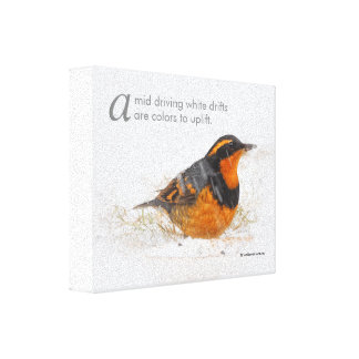Poetic Words Male Varied Thrush in the Snow Canvas Print