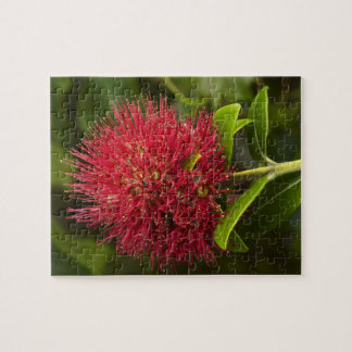 Pohutukawa Flower, Dunedin Jigsaw Puzzle