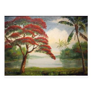 Poinciana royal (arbre flamboyant) cartes postales