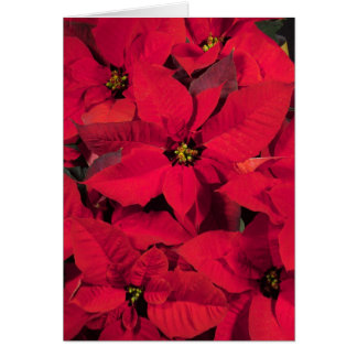 Poinsettia Christmas Card