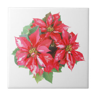 Poinsettia Christmas Star transparent PNG Tiles