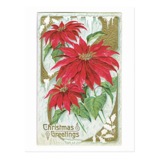 Poinsettia démodée de Noël Cartes Postales
