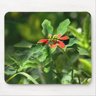 Poinsettia in the Making mousepad