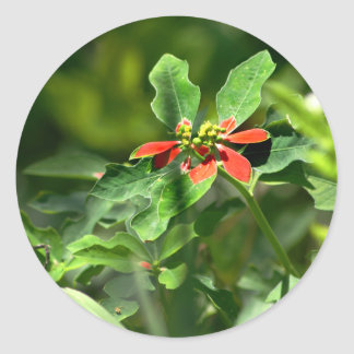 Poinsettia in the Making sticker