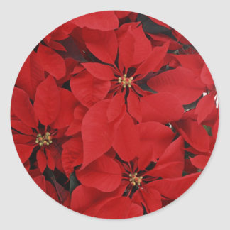 Poinsettias for Christmas Classic Round Sticker