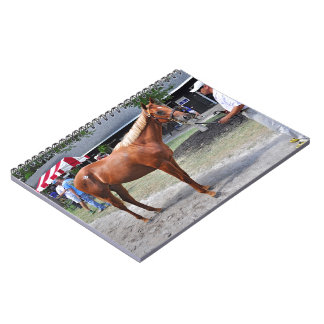 Point of Entry Colt Notebooks