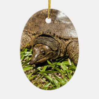Pointed Long Nose Florida Softshell Turtle Ceramic Oval Ornament