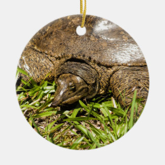 Pointed Long Nose Florida Softshell Turtle Round Ceramic Ornament