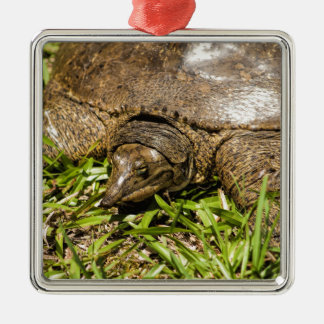 Pointed Long Nose Florida Softshell Turtle Silver-Colored Square Ornament