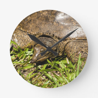 Pointed Long Nose Florida Softshell Turtle Wall Clocks