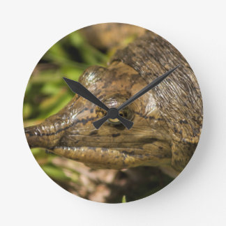 Pointed Nose Florida Softshell Turtle Clock