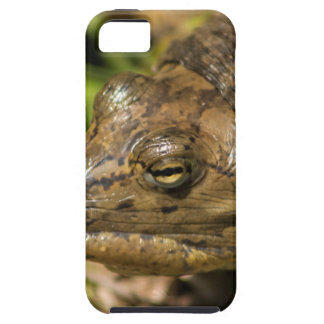 Pointed Nose Florida Softshell Turtle iPhone 5 Cover