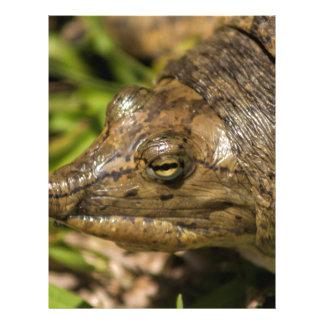 Pointed Nose Florida Softshell Turtle Letterhead Design