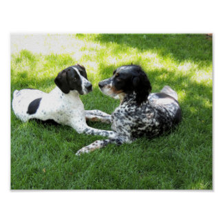 Pointer and Setter Love Poster