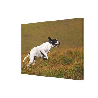 Pointer. Canis lupus familiaris Canvas Print