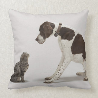 Pointer looking down at cat pillows
