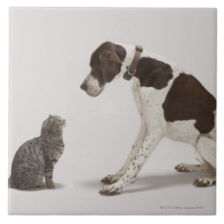 Pointer looking down at cat tile