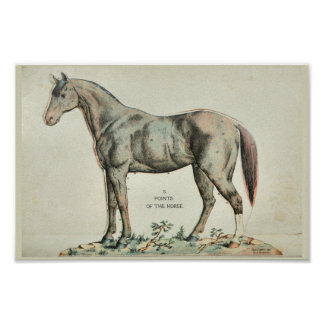 Points of the Horse Vintage Anatomy Print