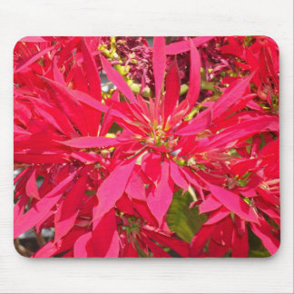 Pointsettias in San Diego Mouse Pad