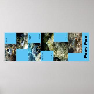 Poipu Fish Poster