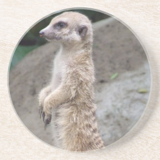 Poised Meerkat Coaster