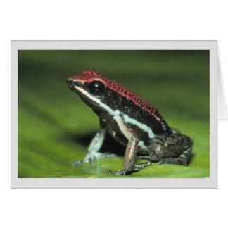 Poison Dart Frog Card