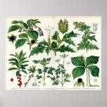 Poisonous Plants Print