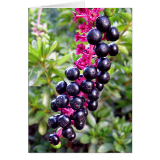 Pokeweed Note Card