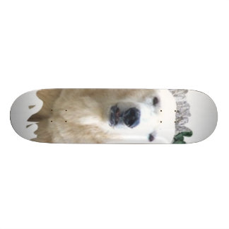 Polar Baer Skate Board Decks