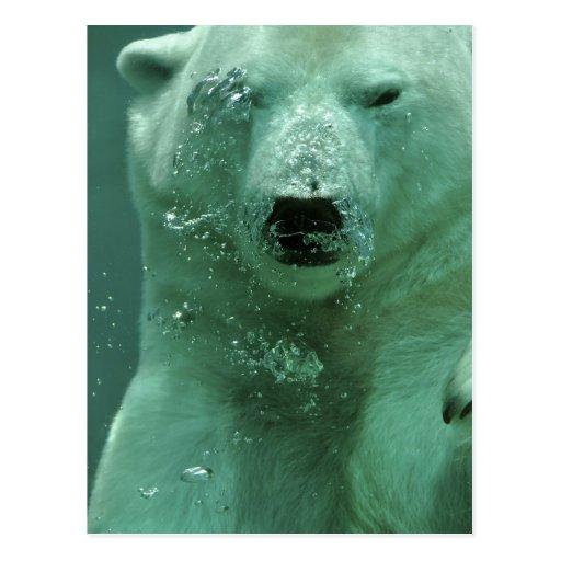 polar-bear-4069 post card