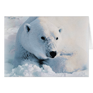 Polar Bear and Snow Card