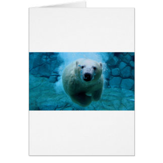 polar-bear card