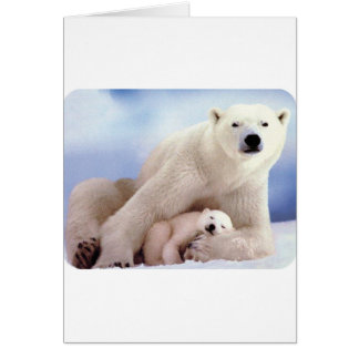 polar-bear- card