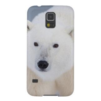 Polar Bear Cases For Galaxy S5