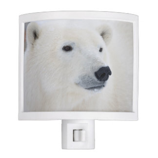 Polar Bear Churchill Night Light