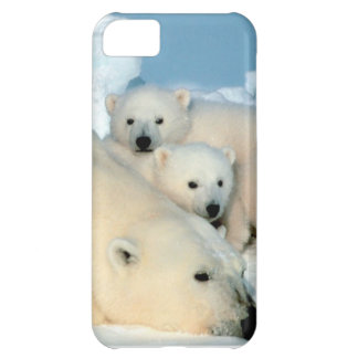 Polar bear cub 1 iPhone 5C case