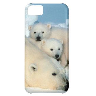 Polar bear cub 1 iPhone 5C case