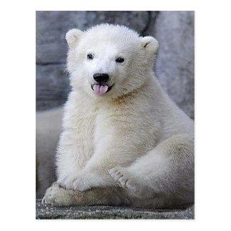 Polar Bear Cub Postcard
