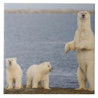 Polar bear cubs and their mother ceramic tile